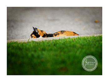 Crouching_kitty_hidden_mouse